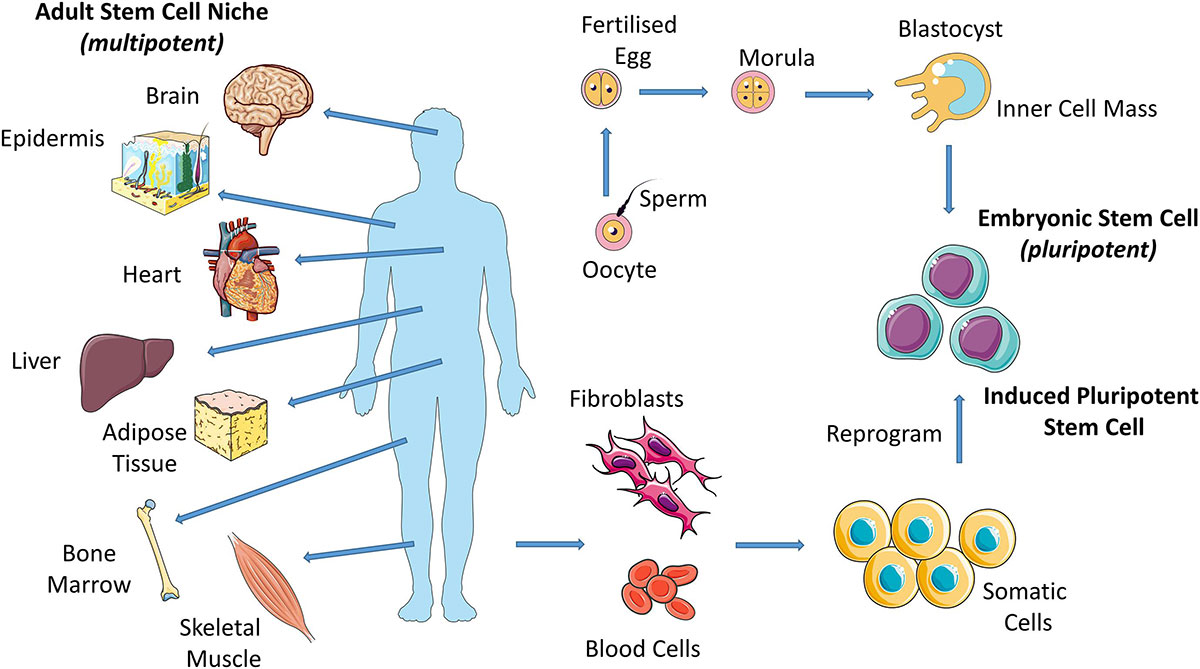 Benefits of Stem Cell Therapy