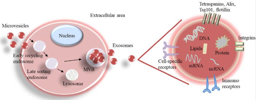 Exosomes Treatment